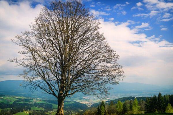 Forstnerwirt-Umgebung-lavanttal